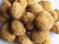 栾川山珍——猴头菇 (3)